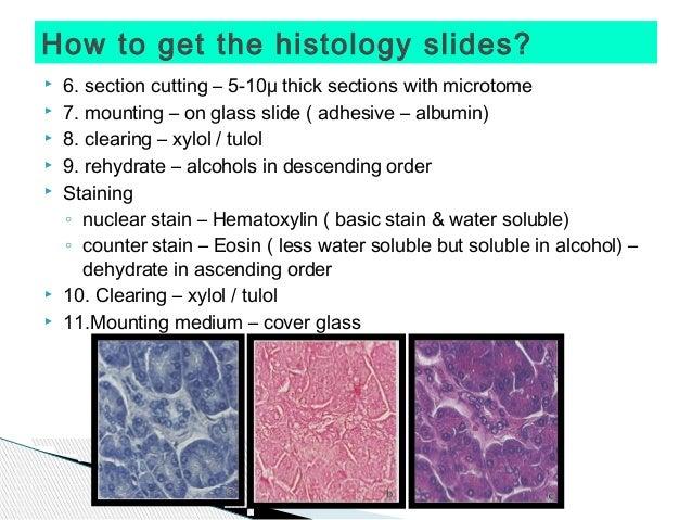 Free Histology Flashcards - StudyStack