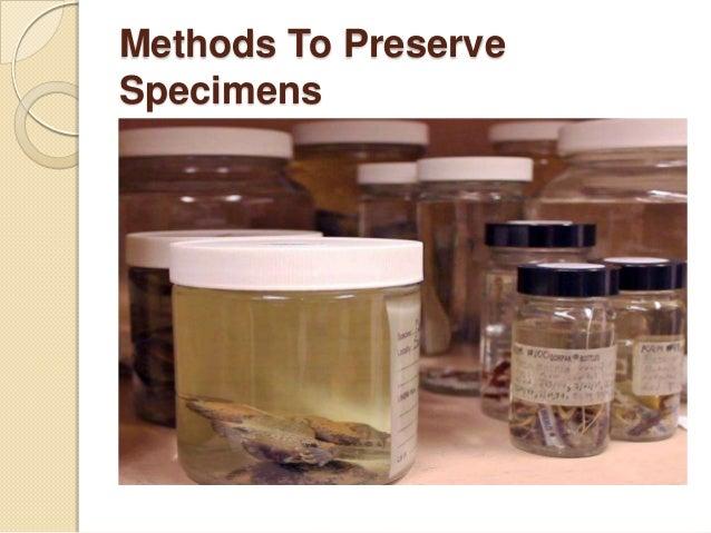 Methods To Preserve Specimens