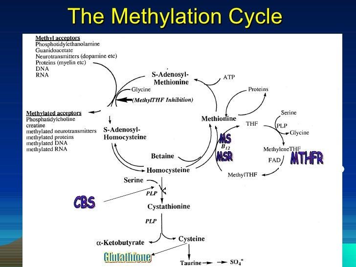 steroidogenesis inhibitors canada inc