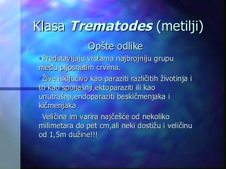 Klasa  Trematodes   ( metilji ) <ul><li>Op š te odlike </li></ul><ul><li>P redstavljaju vrstama najbrojniju grupu među plj...