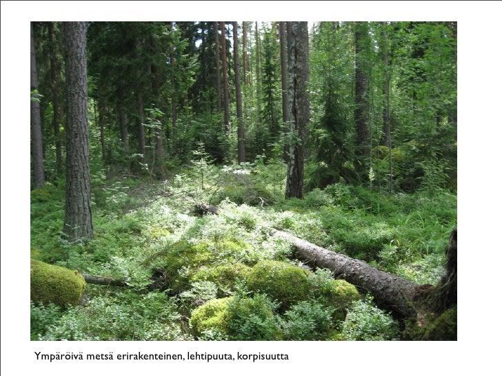 Vesijako Metsä