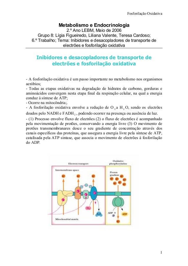 Fosforilação Oxidativa 1 Metabolismo e Endocrinologia 2.º Ano LEBM, Maio de 2006 Grupo 8: Lígia Figueiredo, Liliana Valent...