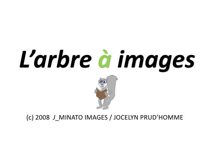L'arbre à images<br />(c) 2008  J_MINATO IMAGES / JOCELYN PRUD'HOMME<br />