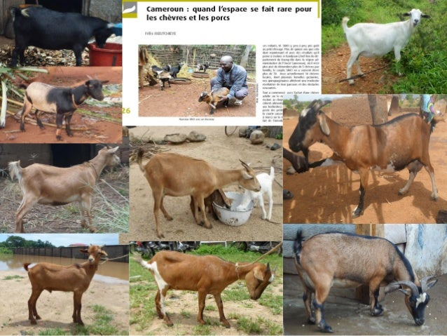 Bienvenue à Soutenance publique de thèse de Doctorat/PhD Biotechnologies et Productions Animales Option: Amelioration Géné...