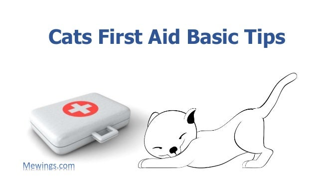 Cats First Aid Basic Tips