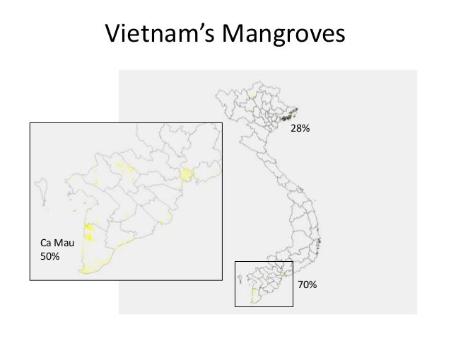 Certified Organic Shrimp: A New Approach to Mangrove PES?
