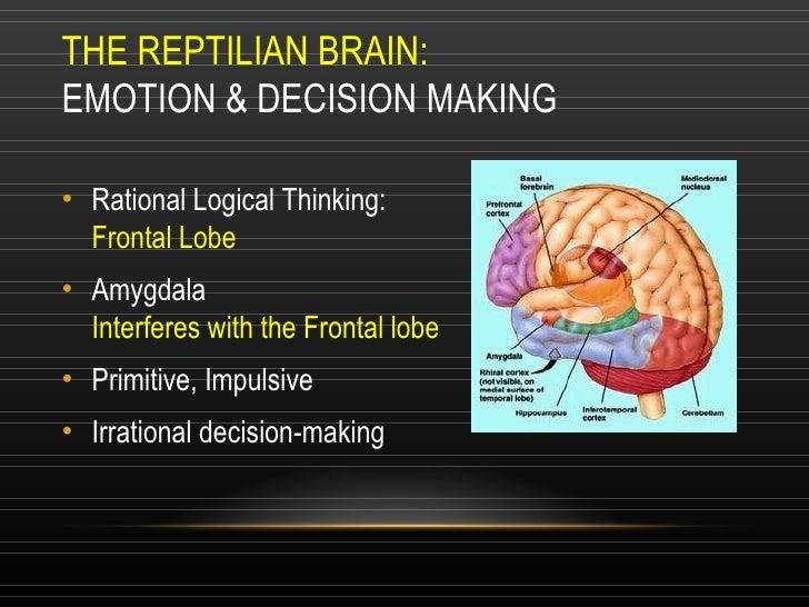 THE REPTILIAN BRAIN: EMOTION & DECISION MAKING <ul><li>Rational Logical Thinking: Frontal Lobe </li></ul><ul><li>Amygdala ...