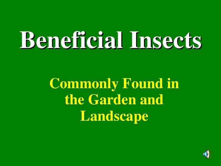 Beneficial Insects Commonly Found in the Garden and Landscape