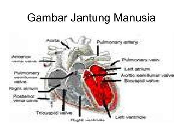 Mgmp Slide Peredaran Darah