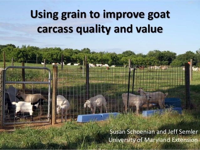 Using grain to improve goat carcass quality and value               Susan Schoenian and Jeff Semler               Universi...