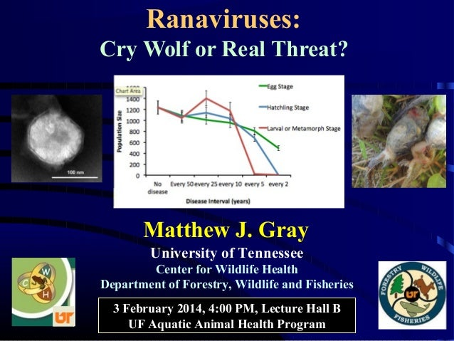 Ranaviruses: Cry Wolf or Real Threat?  Matthew J. Gray University of Tennessee Center for Wildlife Health Department of Fo...