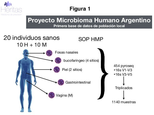 20 individuos sanos  10 H + 10 M Fosas nasales bucofaringeo (4 sitios) Piel (2 sitios) Gastrointestinal Vagina (M) 454 pyr...