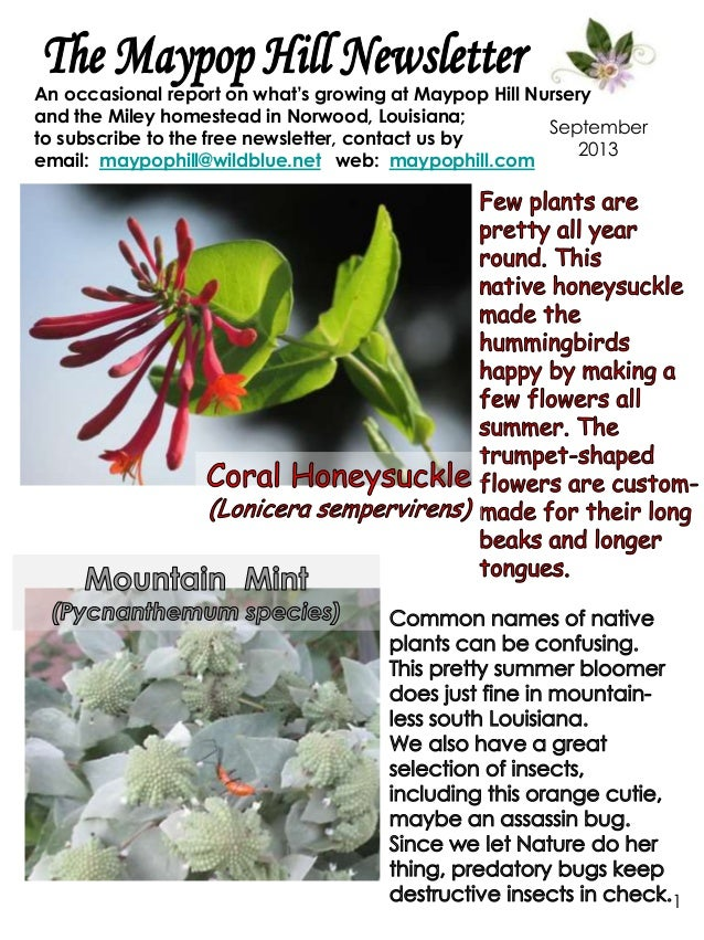1 September 2013 An occasional report on what's growing at Maypop Hill Nursery and the Miley homestead in Norwood, Louisia...