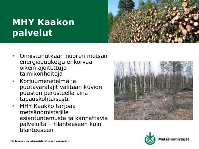 """Me teemme metsänomistajan eteen enemmän. Kestävää lähienergiaa """"Aines- ja energiapuun yhdistelmäkorjuu on kannattavaa – Ni..."""