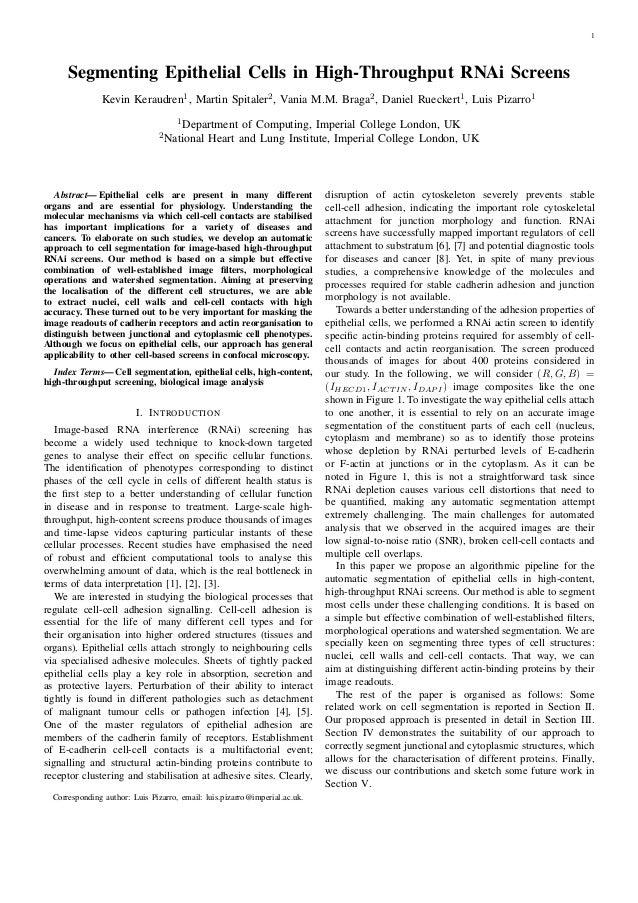 1 Segmenting Epithelial Cells in High-Throughput RNAi Screens Kevin Keraudren1, Martin Spitaler2, Vania M.M. Braga2, Danie...