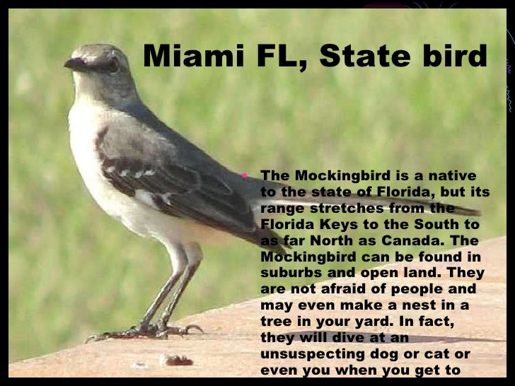 3 Miami FL State Bird