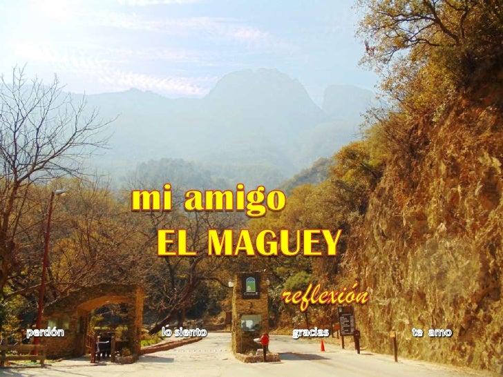 mi amigo <br />EL MAGUEY<br />reflexión<br />