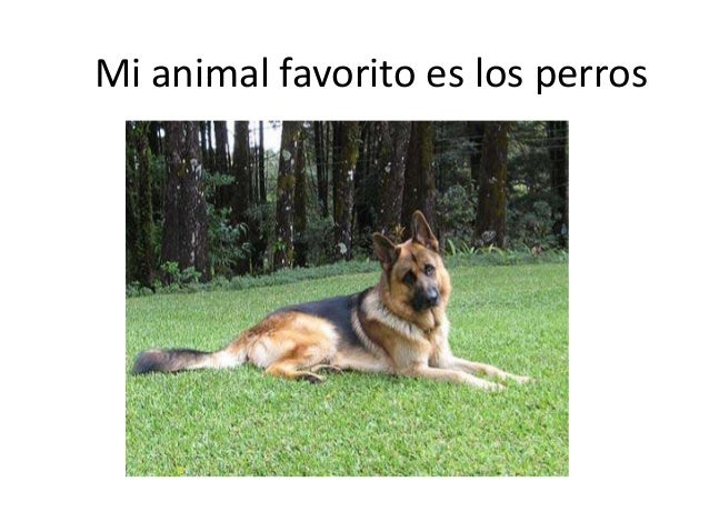 Mi animal favorito es los perros