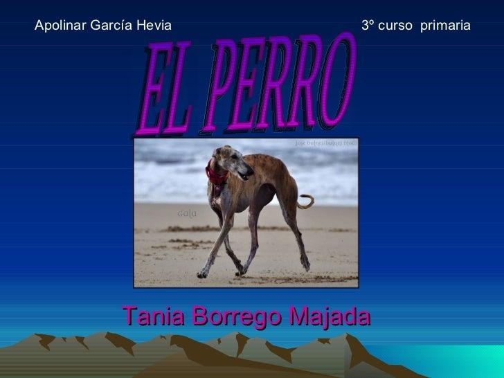 <ul><li>Apolinar García Hevia  3º curso  primaria </li></ul>EL PERRO Tania Borrego Majada
