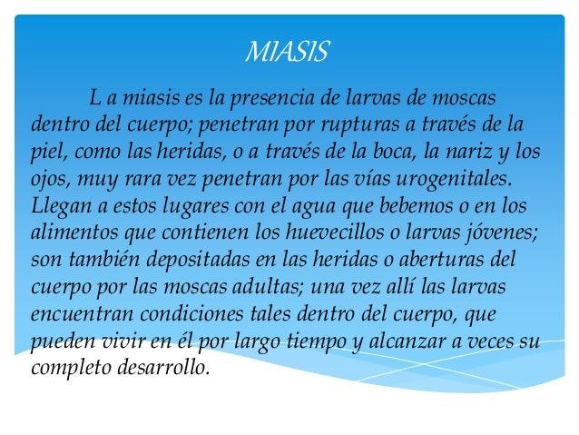 MIASIS  L a miasis es la presencia de larvas de moscas  dentro del cuerpo; penetran por rupturas a través de la  piel, com...