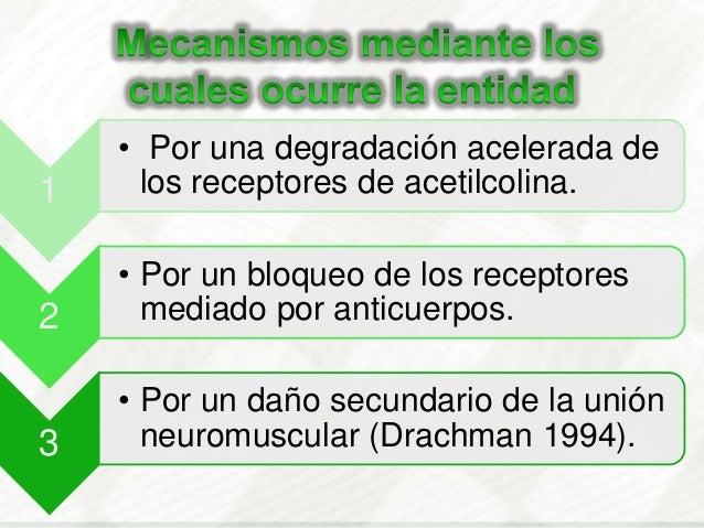 1• Por una degradación acelerada delos receptores de acetilcolina.2• Por un bloqueo de los receptoresmediado por anticuerp...