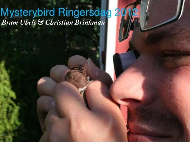 Mysterybird Ringersdag 2012