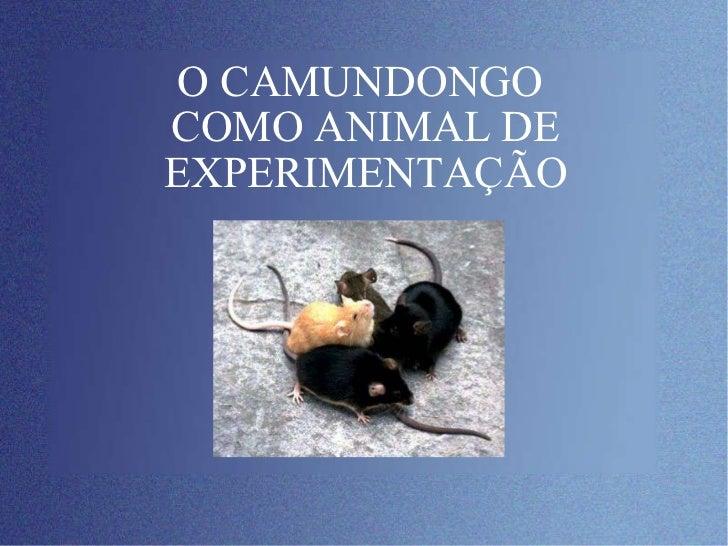 O CAMUNDONGO  COMO ANIMAL DE EXPERIMENTAÇÃO