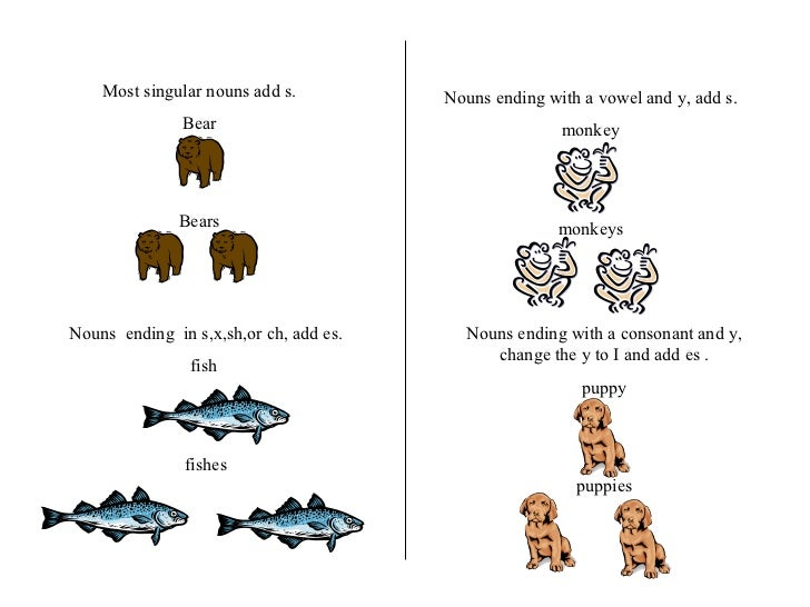 Most singular nouns add s. Bear Bears Nouns  ending  in s,x,sh,or ch, add es. fish  fishes Nouns ending with a vowel and y...