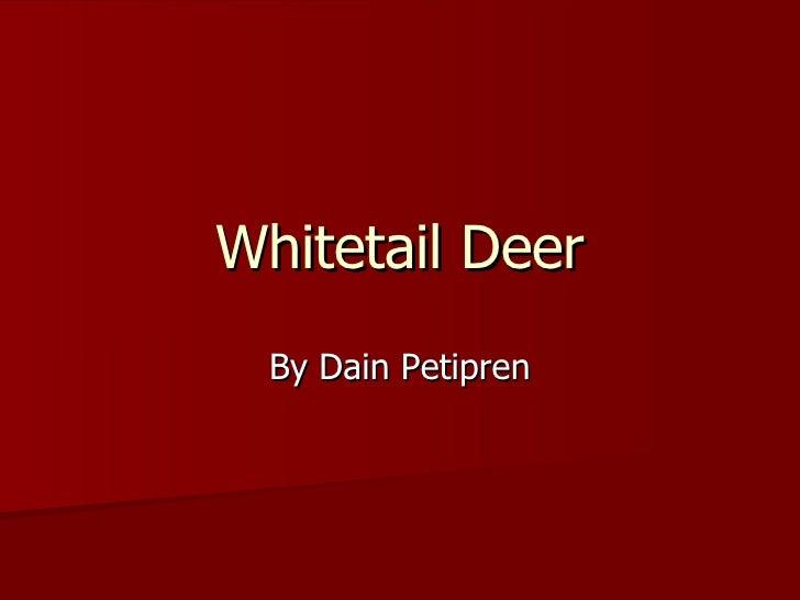 Whitetail Deer By Dain Petipren