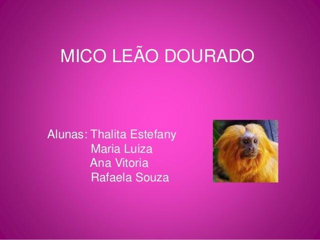 MICO LEÃO DOURADO  Alunas: Thalita Estefany  Maria Luiza  Ana Vitoria  Rafaela Souza