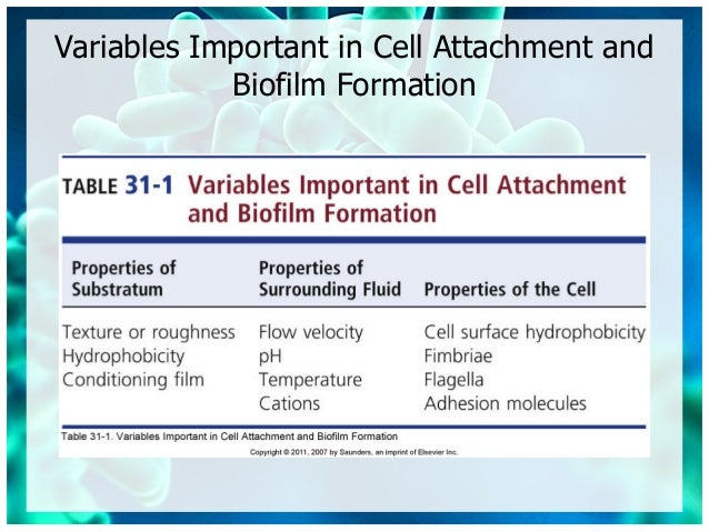 Micro chapter 31 biofilms - architects of disease