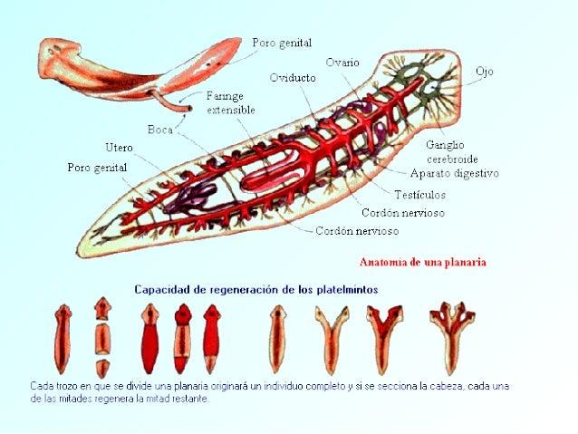 Micro-zoologia