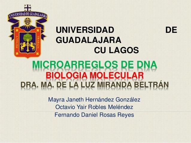 MICROARREGLOS DE DNA BIOLOGIA MOLECULAR DRA. MA. DE LA LUZ MIRANDA BELTRÁN Mayra Janeth Hernández González Octavio Yair Ro...
