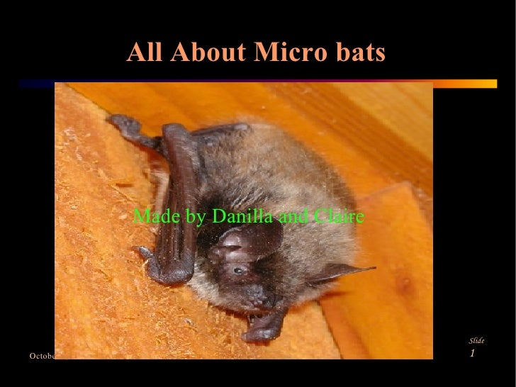 All About Micro bats Made by Danilla and Claire