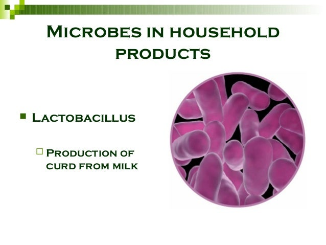 microbes in human welfare Notes on microbe in human welfare for class 12 students (part-1) topic covered-microbe in household product-how milk is converted to curd,reason for rising.