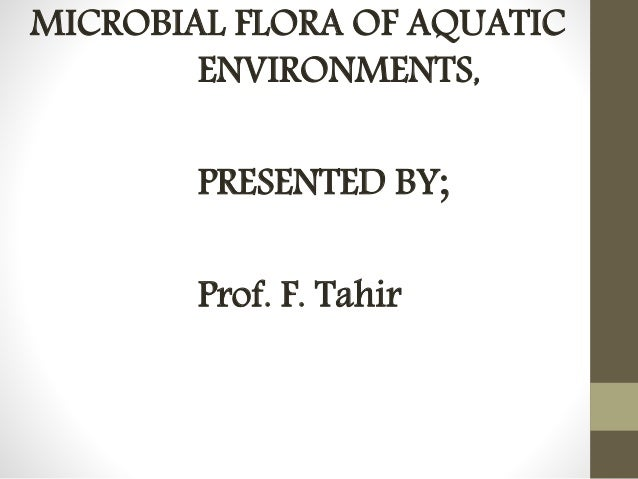 MICROBIAL FLORA OF AQUATIC  ENVIRONMENTS,  PRESENTED BY;  Prof. F. Tahir
