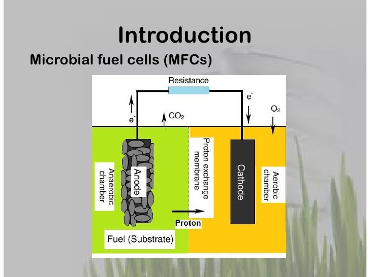 microbial fuel cell thesis Efficient energy harvester for microbial fuel cells using dc/dc converters jae-do park, phd dept of electrical engineering university of colorado denver.