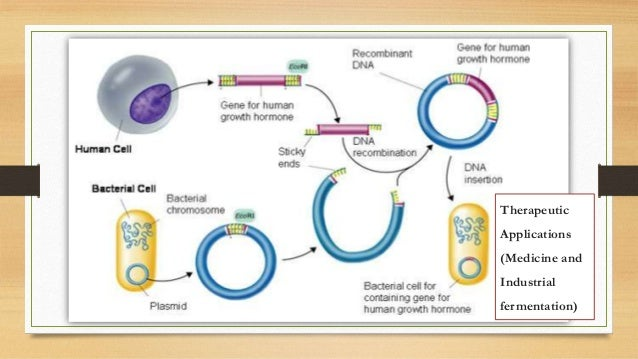 Hgh bacteria diagram diy wiring diagrams hgh bacteria diagram images gallery ccuart Image collections