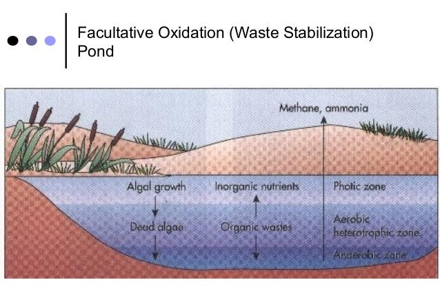 Microbial removal during sewage treatment for Design of oxidation pond