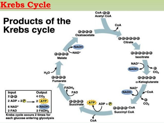 Microbial respiration