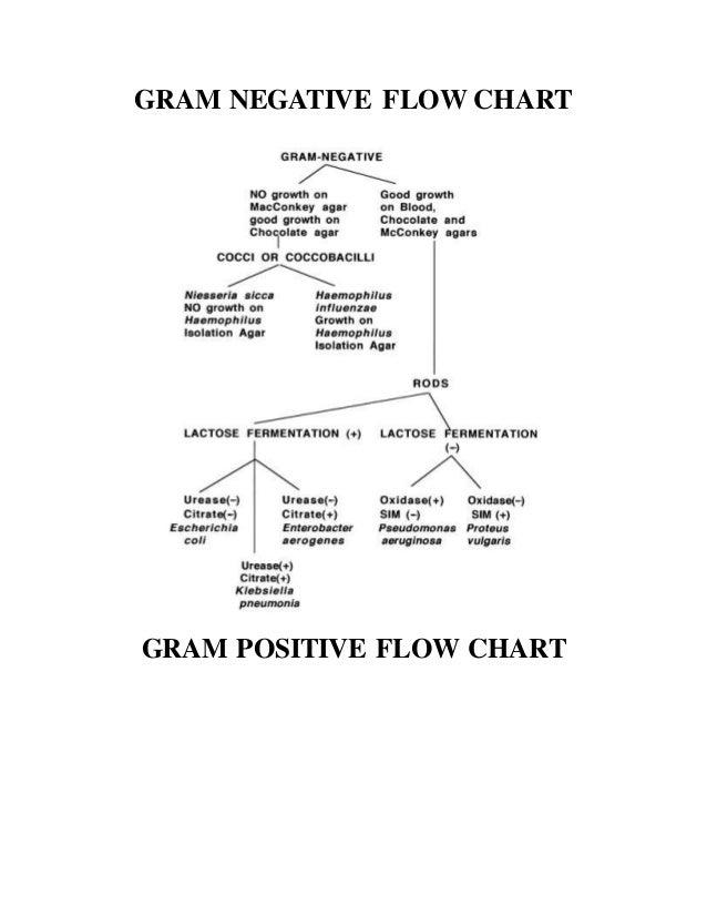 Microbilogy Flow Chart