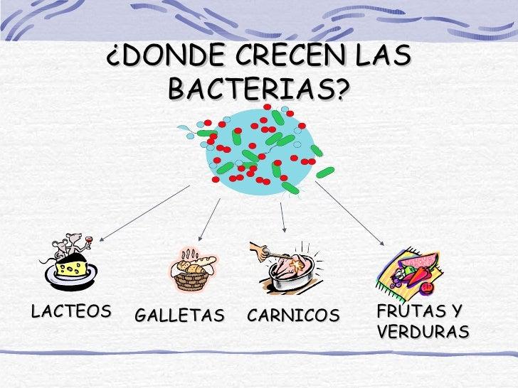 ¿DONDE CRECEN LAS         BACTERIAS?LACTEOS   GALLETAS   CARNICOS   FRUTAS Y                                VERDURAS