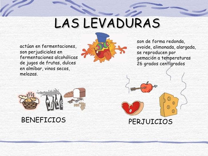 LAS LEVADURAS                              son de forma redonda,actúan en fermentaciones,     ovoide, alimonada, alargada,...