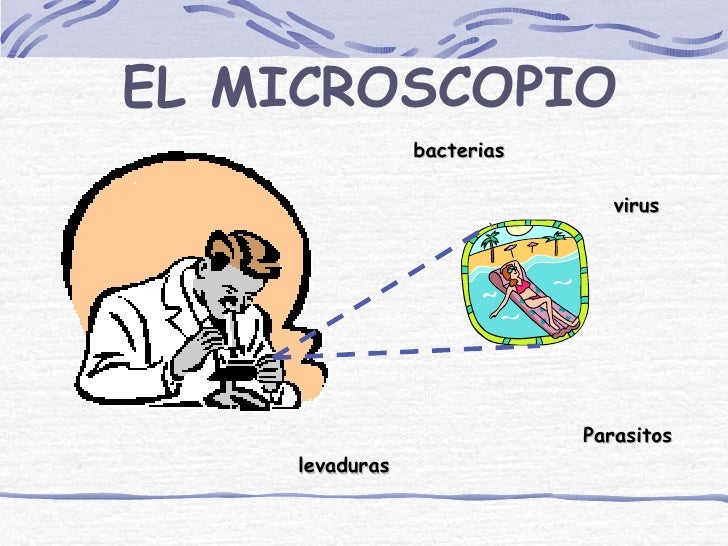 EL MICROSCOPIO                bacterias                               virus                            Parasitos    levadu...