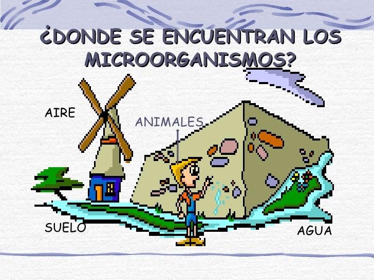 ¿DONDE SE ENCUENTRAN LOS       MICROORGANISMOS?AIRE          ANIMALESSUELO                 AGUA