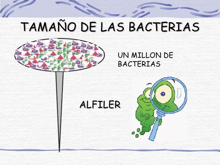 TAMAÑO DE LAS BACTERIAS             UN MILLON DE             BACTERIAS       ALFILER
