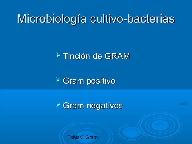 Microbiología cultivo-bacterias        Tinción de GRAM        Gram   positivo        Gram   negativos         ToMaV Gram