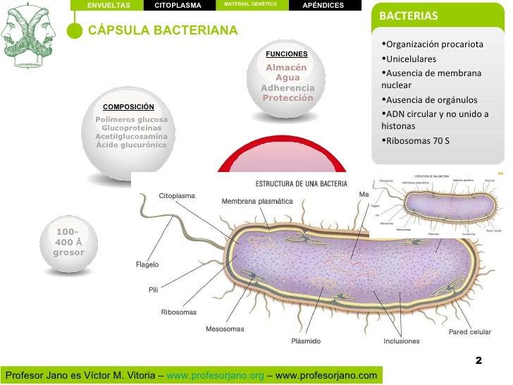 Estructura Bacteriana
