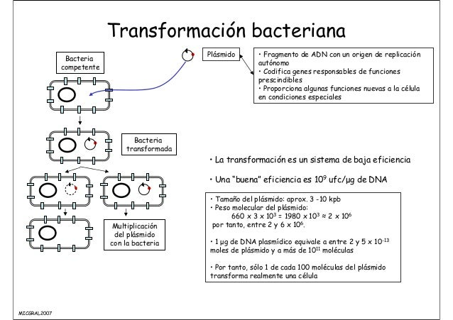Articles on Bacteria