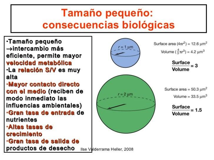 microbiologia generalidades Slide 3